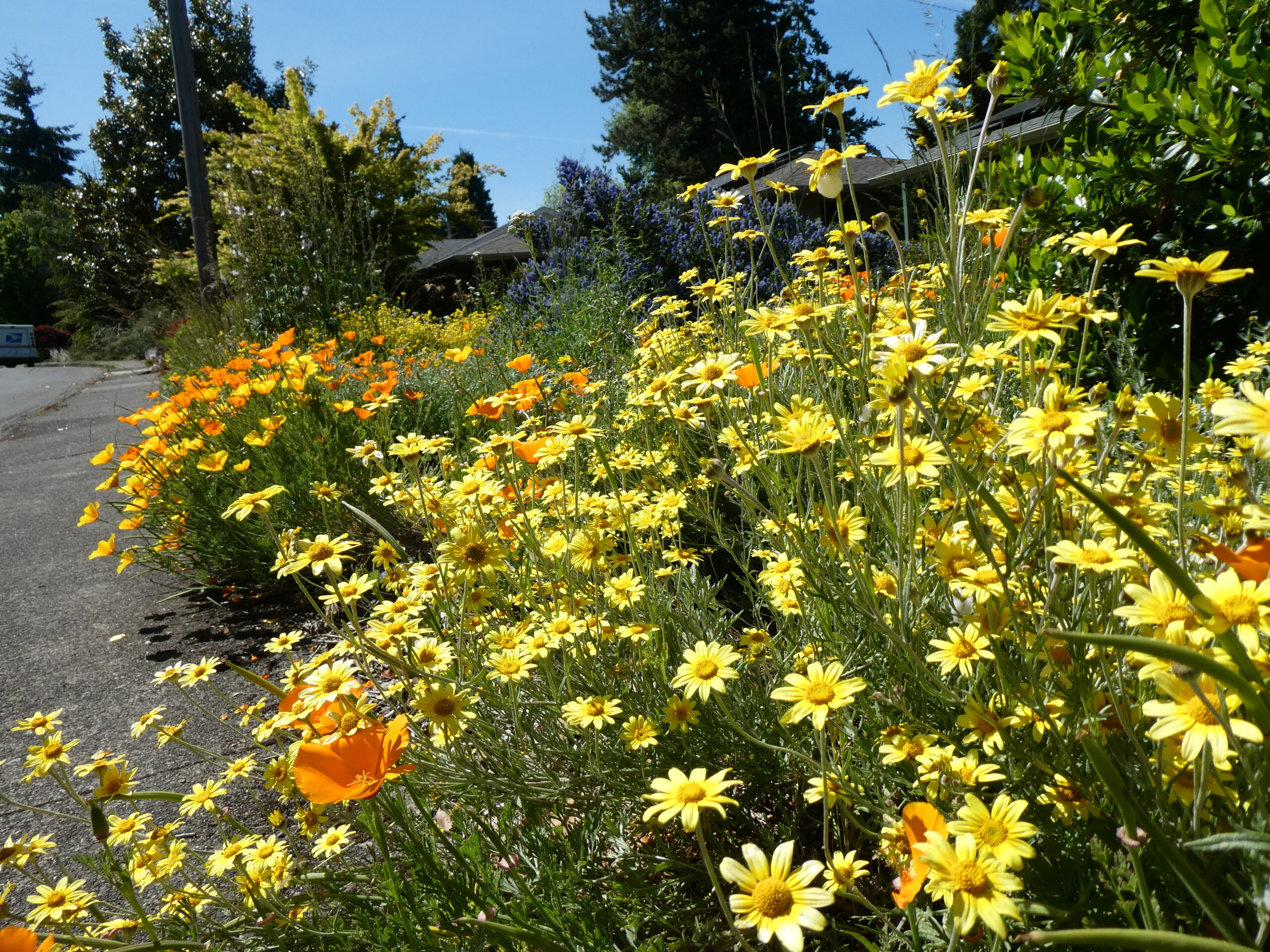 Individually we can take action to restore nature around our homes; collectively we can enrich the natural environment of our community. ---Steve Soltesz / SEN
